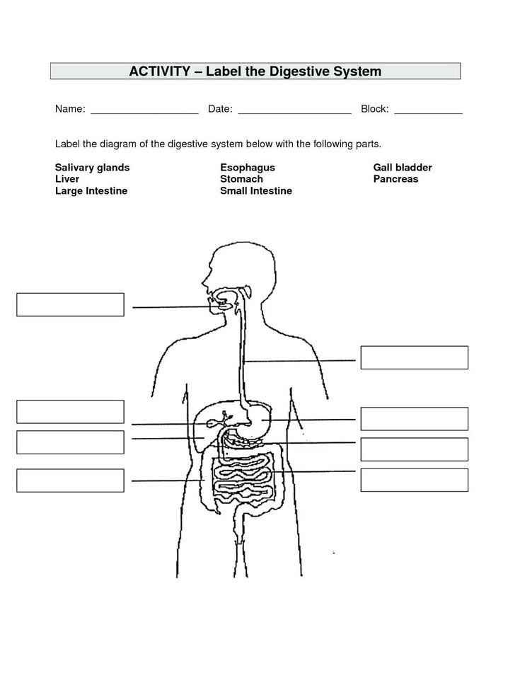 unlabeled digestive system diagram unlabeled digestive. Black Bedroom Furniture Sets. Home Design Ideas