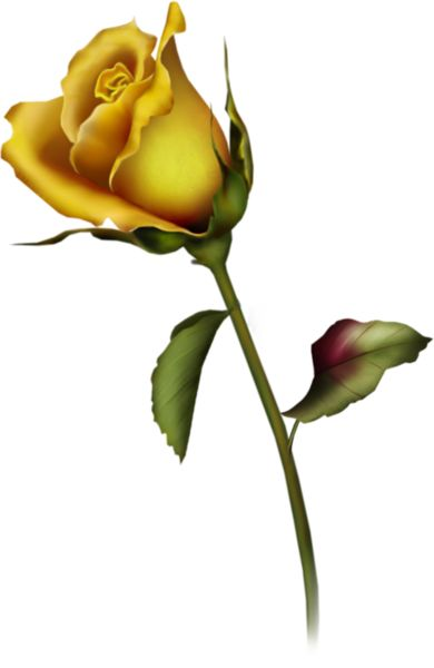 Yellow Rose Bud Clip Art   Gallery Free Clipart Picture… Roses PNG Yellow Rose Bud Art…