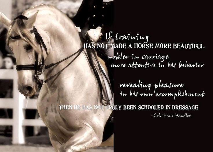 Horse Pictures With Quotes Dressage horse quote.