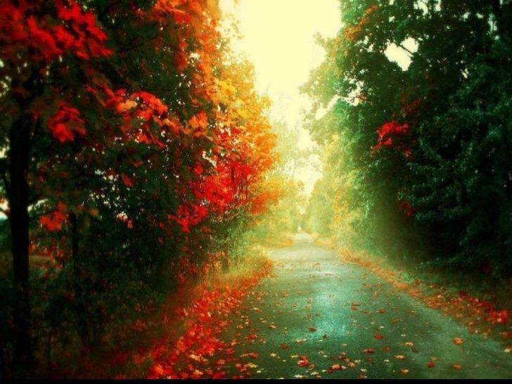 Romantic autumn scenes; 2. end