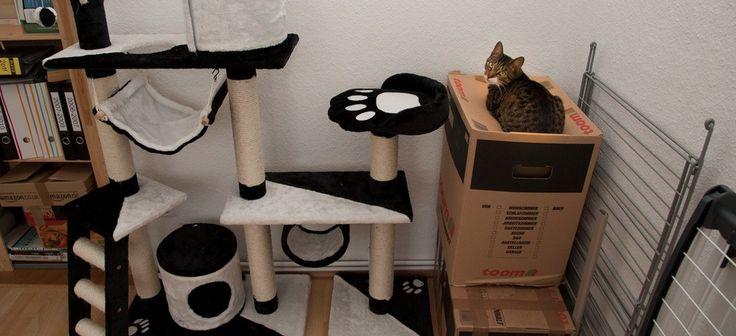 14x de grappigste voorbeelden van kattenlogica