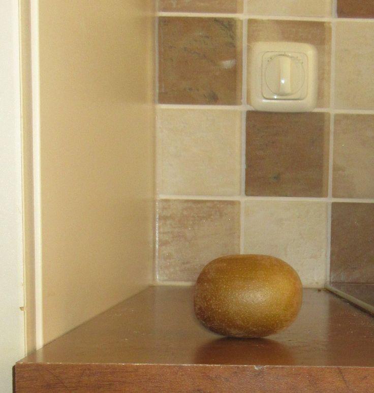 kiwi. Foto gemaakt door Hidde.