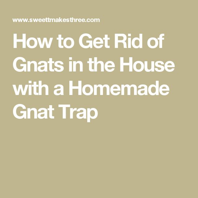 how to know if you have gnats