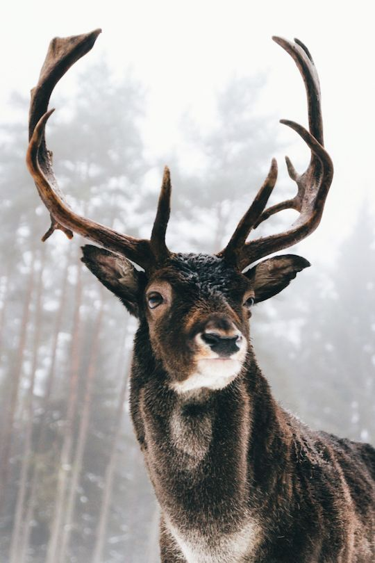 It's kinda strange that deers look so majestic and we seriously fancy them for their pride, but then we go, chop their heads of and hang them in our living rooms.