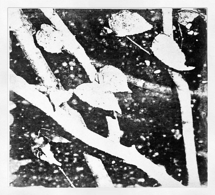 STAMPA LITOGRAFICA - Incisione Su Pietra  By Kikka  #Art #Iloveart #Instaart #FePam #GraphicArt #FePamGraphicArt