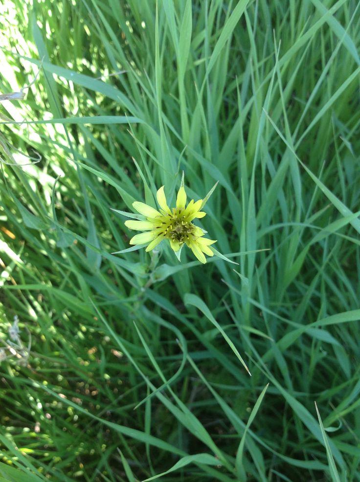 Цветок полевой