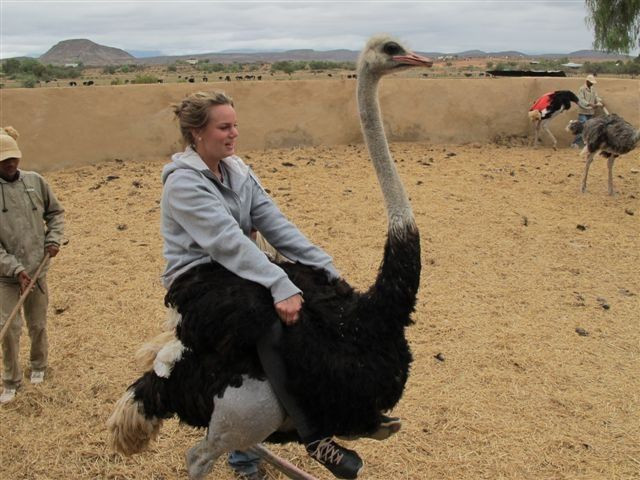 Are you brave enough to ride an ostrich? join us now http://book.hotspots2c.co.za/keyword/ostrich