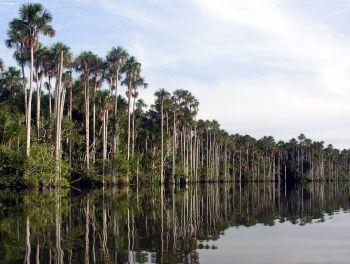 La riserva nazionale di Tambopata in Perù un vero paradiso tropicale
