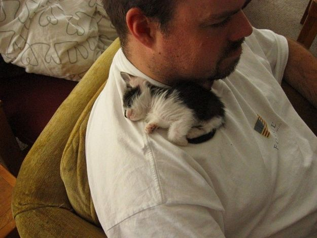 Expectation: delightfully soft warm kitty cuddles all the time always <3 <3 <3 | The Expectations Versus Reality Of Getting A Cat
