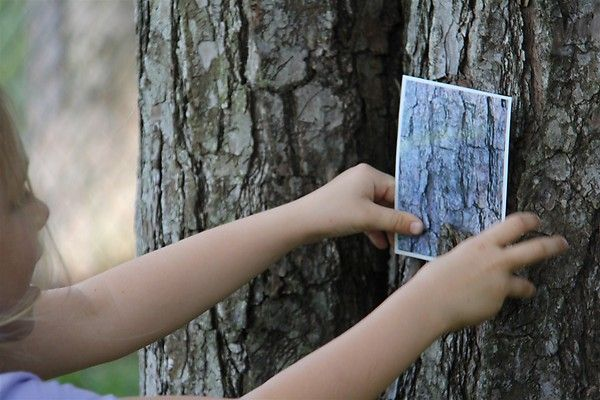 Take photos of tree bark - print off photos and have kids try to find the tree. Could also do with leaves!