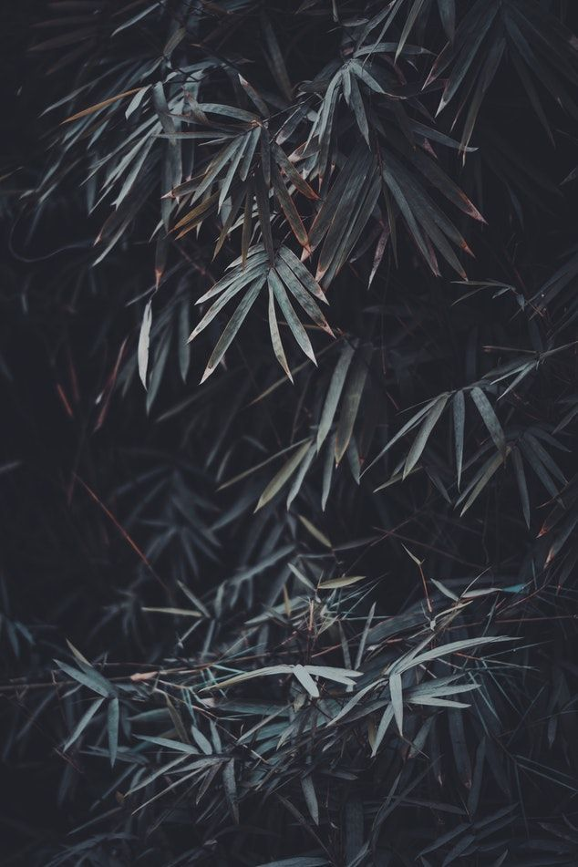 Moody Landscapes Lightroom Presets Iphone Wallpaper Night Plain Black Wallpaper Black Wallpaper Iphone Dark