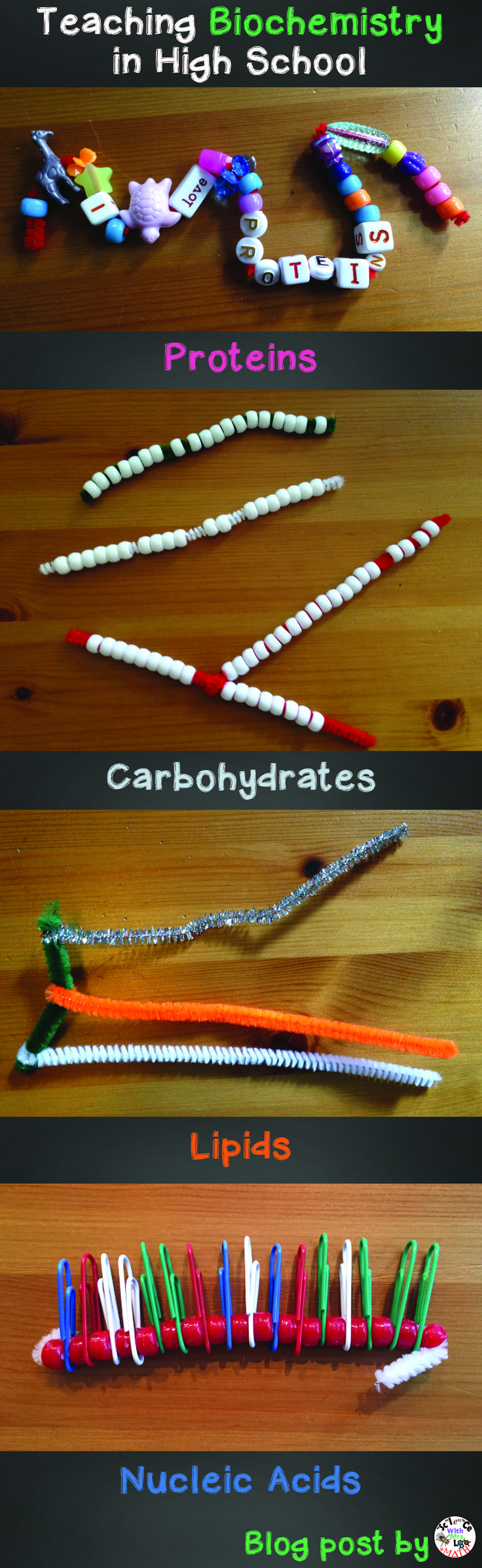 Molecular models science teachers can use to show proteins, nucleic acids, carbohydrates, and lipids  Blog post by Bethany Lau at Science and Math with Mrs. Lau
