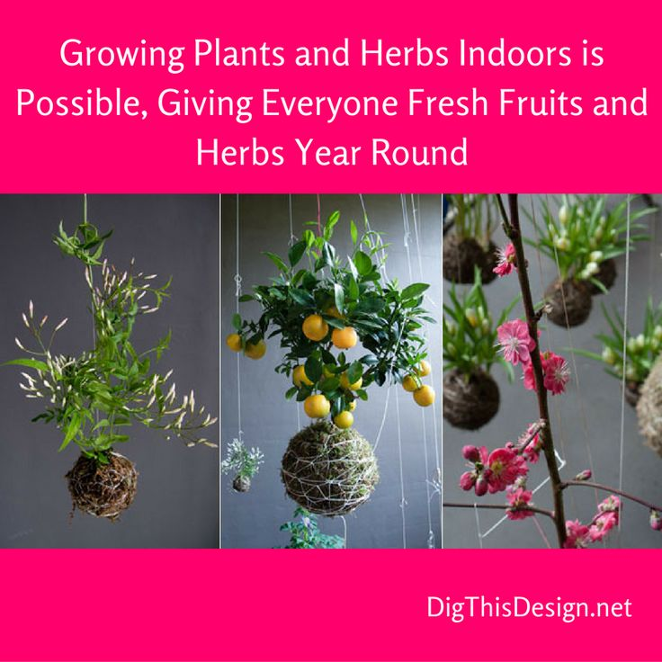 You Do Not Need A Green Thumb To Have Fresh Fruits And Herbs Year Round Part 57