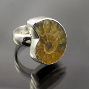 Ammonite Ring 1