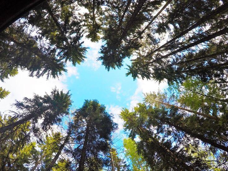 Laipanmaan erämaa-alue on Etelä-Suomen suurin yksittäinen metsäalue.