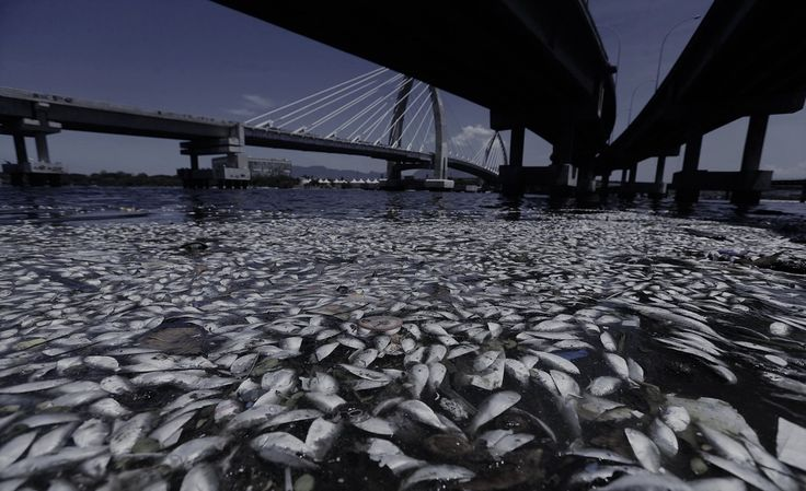 Lượng oxy trong các đại dương đã giảm khoảng 80 tỷ...   Mạng Thủy sản Việt Nam