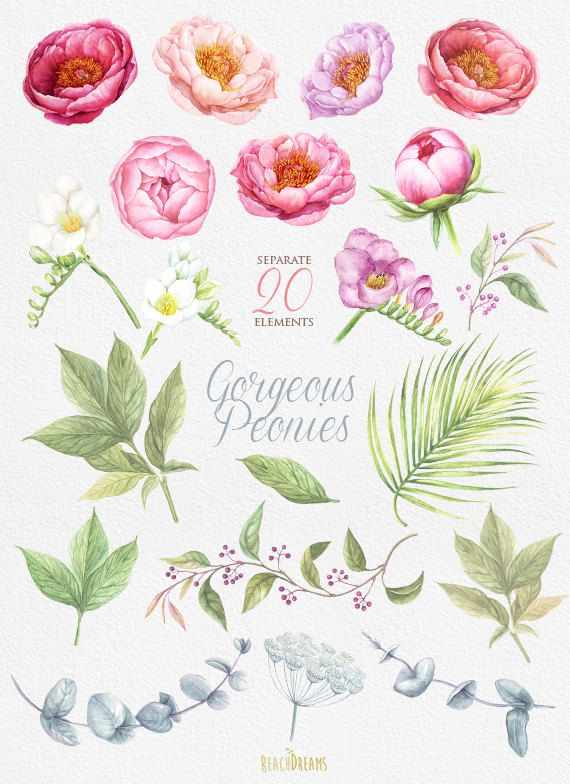 This set of 20 high quality hand painted watercolor flowers: Peonies Flowers, Freesia, Eucalyptus, Sprigs, Leaves Perfect graphic for wedding