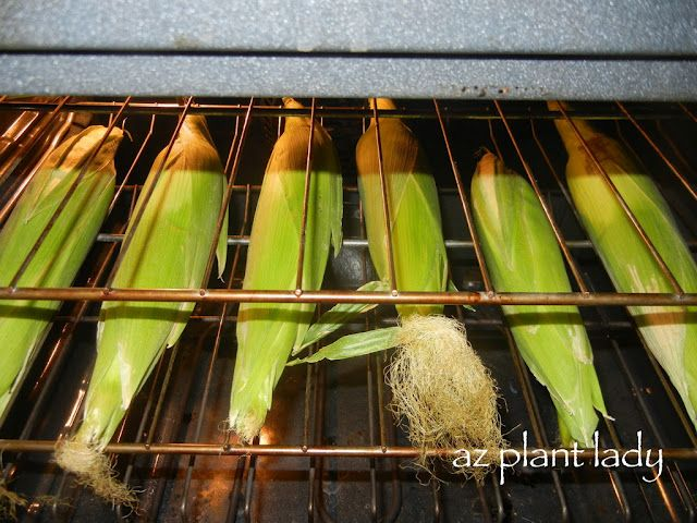 Quick & Easy way to cook delicious corn on the cob.  Simply place the entire corn (husk & hall) in a 350 degree oven for 30 minutes.  The husk will peel off easily and the corn has a great, roasted flavor!