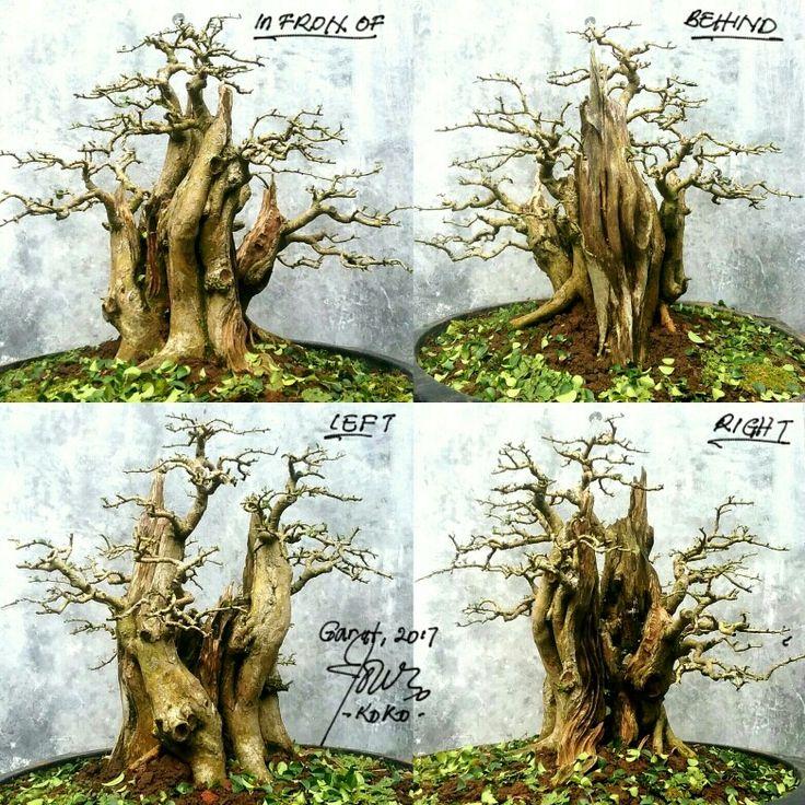 #bonsai #art #plants @kokoponiman