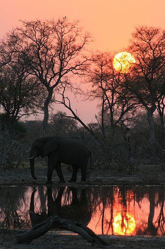 sunrise + elephants, okavango delta, botswana