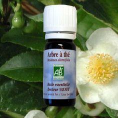L'huile essentielle d'arbre à thé est un anti-infectieux et un antiviral puissant qui renforce les défenses immunitaires.