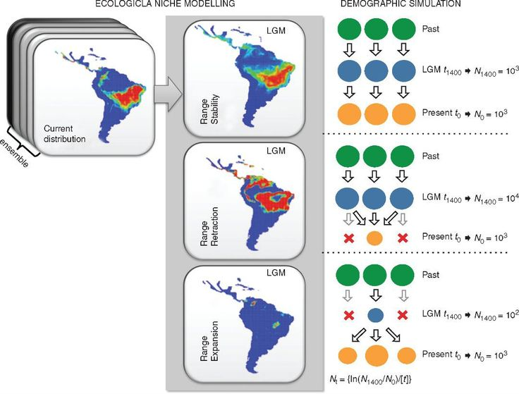 Cyclic glaciations were frequent throughout the Quaternary and this affected species distribution and population differentiation worldwide.  Schematic representation the demographic history scenarios simulated for the 23 populations of Eugenia dysenterica sampled in the Cerrado biome and their geographical representation as predicted by ecological niche models (ENMs). Circles represent hypothetical demes and indicate population stability or shrinkage through time. LGM Last Glacial Maximum…