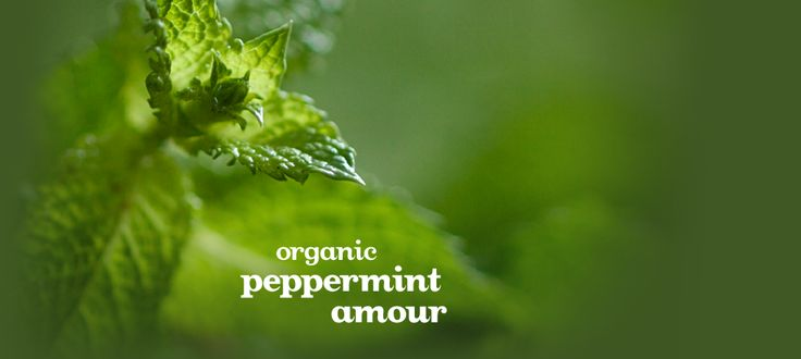Peppermint Amour (Organic) by DavidsTea