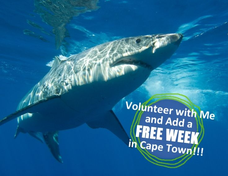 When you join our Great White Shark Conservation Project for one week or more, we'll add on a FREE Week in Cape Town. That's an extra 7 nights for you to explore everything Cape Town has to offer!
