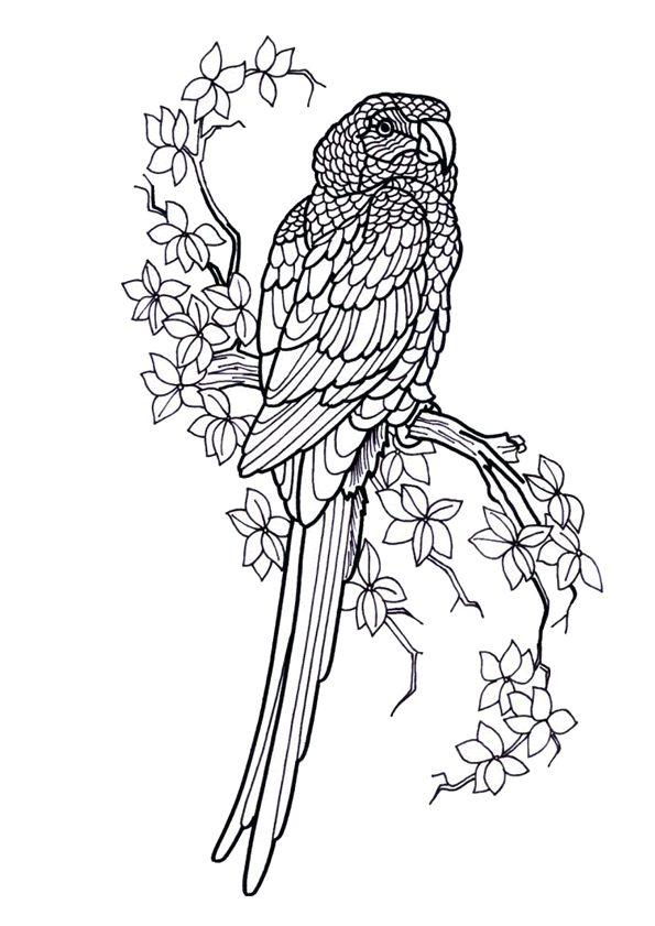 Les 110 meilleures images du tableau coloriages d 39 oiseaux sur pinterest legende coloriages et - Perroquet a colorier ...