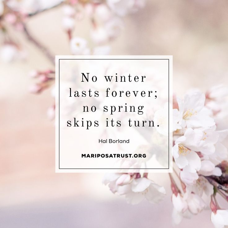 Spring Flowers Quote March Mariposatrust