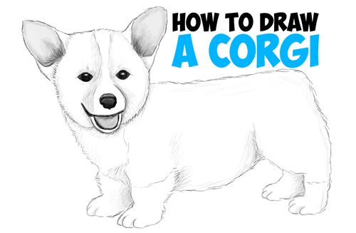 realistic corgi drawing step draw cartoon dog puppy easy beginners drawings tutorial animals animal simple puppies pencil sketches tutorials steps