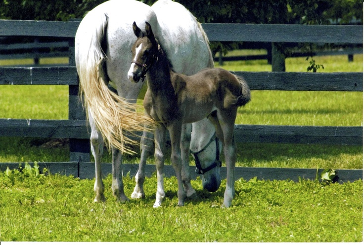 Kentucky!: Baby Lovin, Courses, Summer Day, The Farms, Hors Country, New Baby, Horses Country