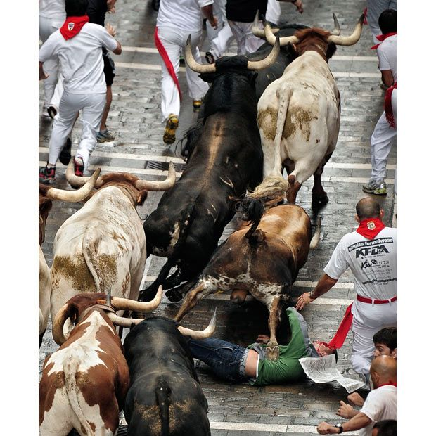 The first running of the bulls at the 2011 San Fermin Festival in Pamplona,   Spain.