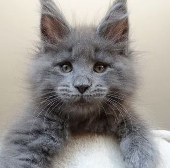 such a fuzzy little guy, and so serious.