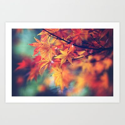 fall leaves Art Print by Sylvia Cook Photography - $19.00