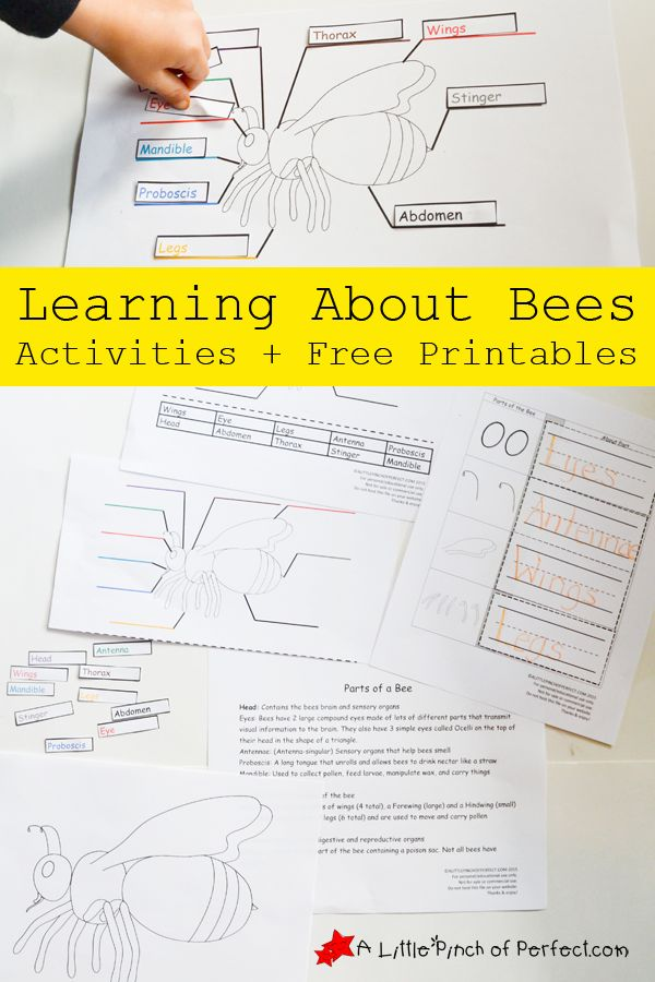 Learning About Bees Activities and Free Printable | A Little Pinch of Perfect