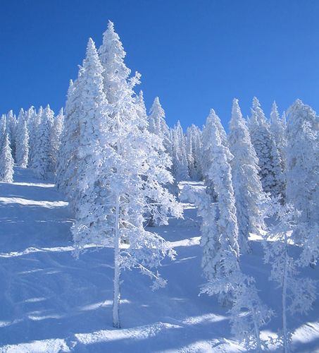 Mt Werner, CO in winter. Skied through glens that looked like this in CO. Magical!