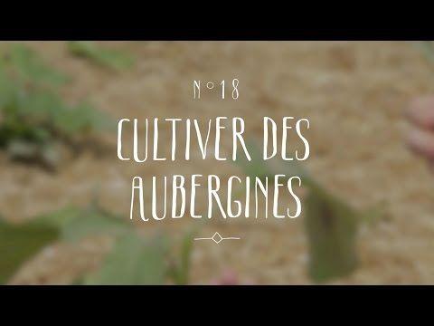 17 best ideas about semis poivron on pinterest culture - Comment planter des poivrons ...