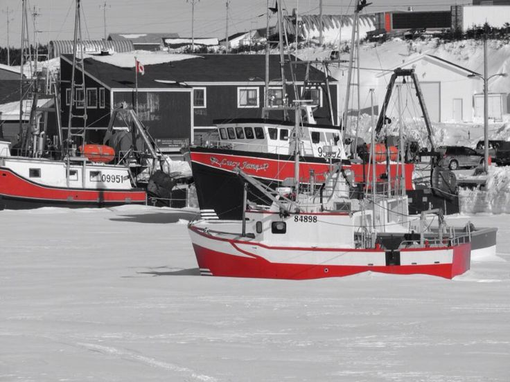 Fishing boats frozen in the sea ice at Port au Choix. It will be late April