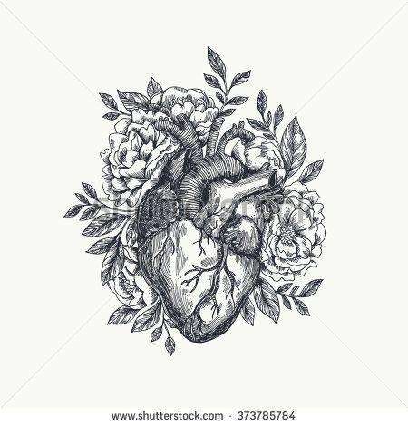Anatomical heart | Shutterstock