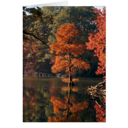 Greeting Card: Autumn Scenes - Cypress Tree Card  $3.15  by Chaldaeus_Images  - cyo customize personalize unique diy idea