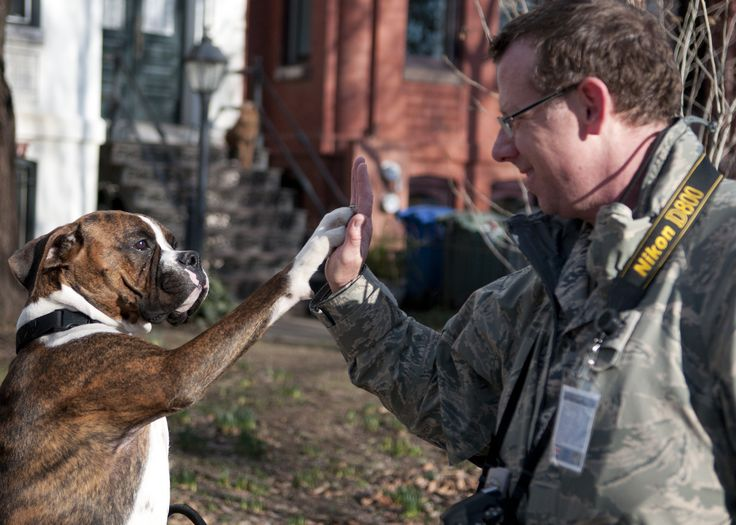 Fotografia titulada Choca esos Cinco by La Guardia Nacional y depositada en Flickr. El sargento Dennis Young choca la mano contra la pata de un Boxer atigrado.