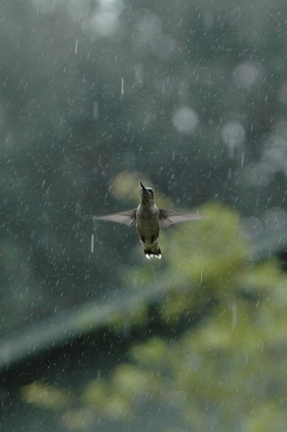 This photo is SO beyond beautiful! I love it with 1,000 hearts! It's a hummingbird caught in the middle of it's rain dance! Thank you,! Merci! Merci! :)