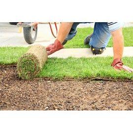 Une pelouse à poser pour un résultat fiable et immédiat. Rouleaux de 1m2, <b>proposés par 1m2</b> jusqu'à 290m2 <b>ou 10m2</b> jusqu'à 2500m2. Voir détails.