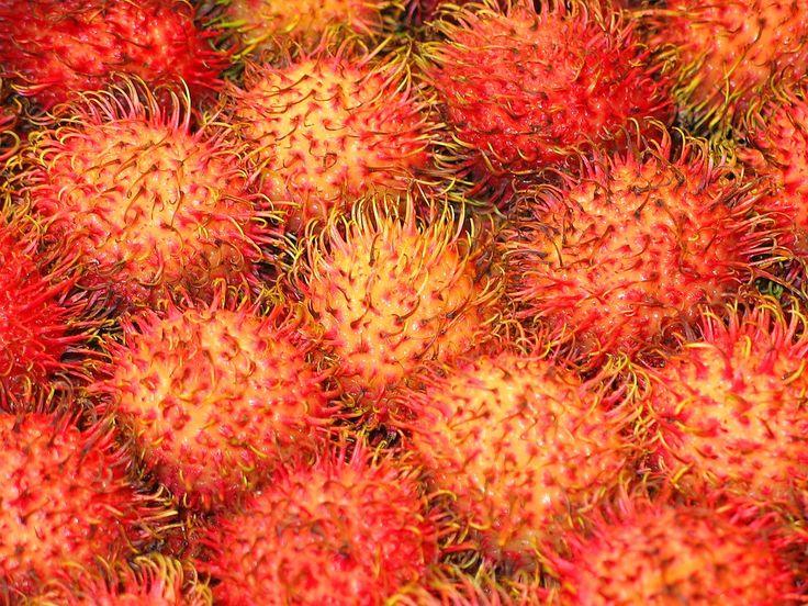 De ramboetan, ook wel de 'harige lychee' genoemd, is een veel voorkomende vrucht in Zuidoost Azië en Zuid-Amerika.