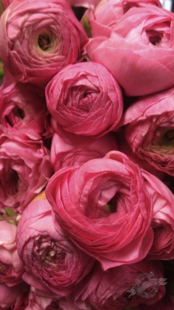 le printemps la valentine marseille ouverture