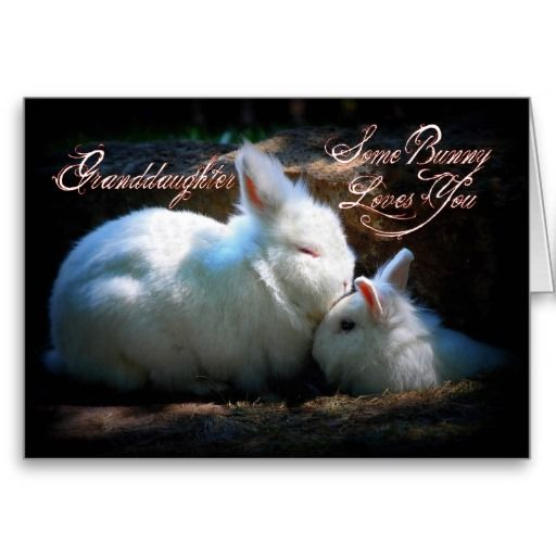 Granddaughter Kissing Bunnies Happy Birthday Card