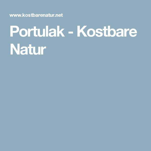 Portulak - Kostbare Natur