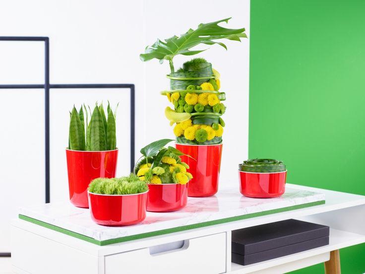 Kraftprotze Fünf Gefäße in energetischem Rot dekoriert mit Pflanzen und floraler Gestaltung sind die Hauptdarsteller in diesem Ensemble.  Ein dekoratives Highlight für ein modernes trendiges Interieur.