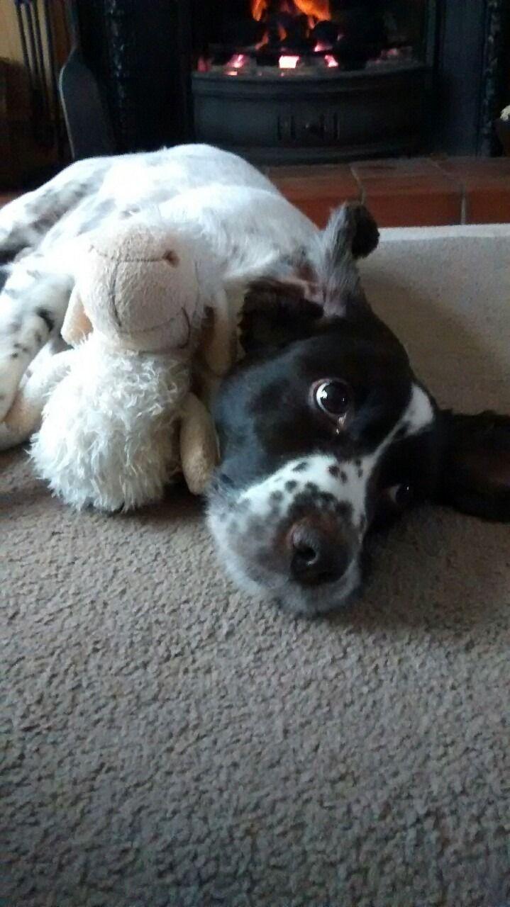 best pet stuff images on pinterest dog stuff pet supplies and pets